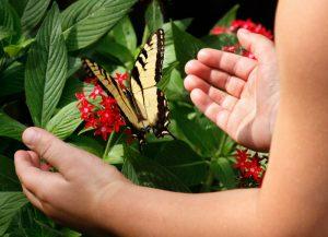 808-butterflies-cu